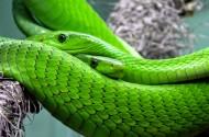 恐怖的蛇图片(10张)