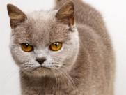 机灵的小萌猫图片(17张)