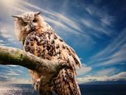 灵动的猫头鹰图片(10张)