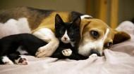 亲密的猫和狗图片(9张)