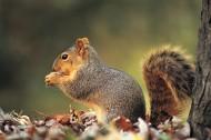 可爱的小松鼠图片(11张)