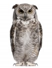 可爱的猫头鹰图片(13张)