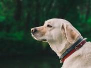 温顺可爱的狗狗图片(10张)