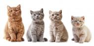 可爱的小猫图片(12张)