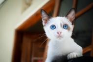 小巧可爱的幼猫图片(10张)