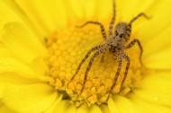 跳蛛图片(12张)
