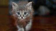 可爱的萌猫图片(12张)