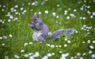 活泼可爱的小松鼠图片(22张)