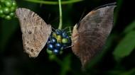 觅食的蝴蝶图片(9张)