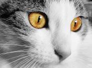 漂亮的猫眼图片(10张)