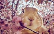 可爱的小兔子图片(16张)