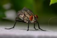 微距苍蝇图片(9张)