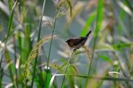 纹鸟图片(9张)