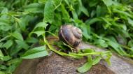 移动缓慢的蜗牛图片(10张)