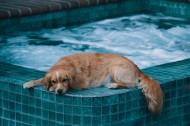 趴着的宠物狗图片(10张)