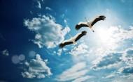 苍鹭图片(5张)