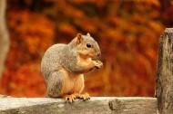 松鼠图片(11张)