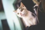 可爱的猫咪图片(14张)