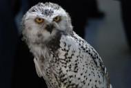 可爱的猫头鹰图片(10张)