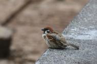 一只娇小的麻雀图片 (15张)