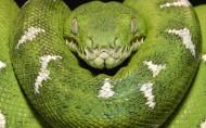 青蛇图片(6张)