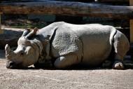 犀牛高清图片(15张)
