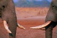 大象局部特写图片(14张)