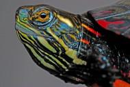 静静休息的乌龟图片(16张)