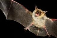 可怕的吸血蝙蝠图片(14张)