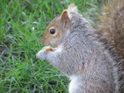 灰色的小松鼠图片(15张)