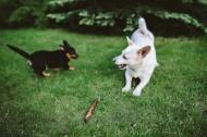 玩棍子的狗图片(9张)
