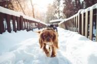 雪地里的宠物狗图片(14张)