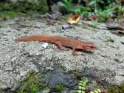 蜥蜴图片(6张)