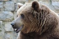 呆萌可爱的狗熊图片(12张)