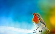 三月鸟类摄影图片(9张)