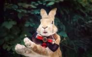 萌宠的兔子图片(5张)