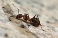 可爱蚂蚁图片(20张)