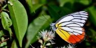 多彩蝴蝶图片(18张)
