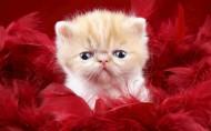 可爱小宠物的可爱瞬间图片(24张)