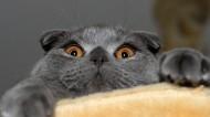 猫咪的表情特写图片(15张)