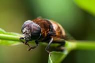 蜜蜂微距图片(8张)