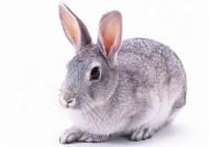 兔子图片(21张)