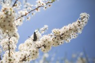 色彩斑斓的蝴蝶图片(12张)