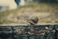 爬行的蜗牛图片(10张)