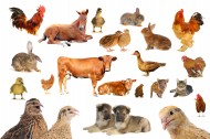 各种动物图片(10张)