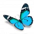 漂亮彩色的蝴蝶图片(20张)