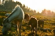 美丽的马群图片(13张)