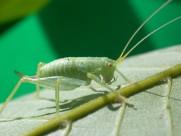 蚂蚱蝗虫图片(6张)