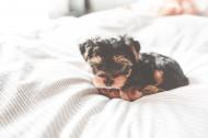 可爱的小狗图片(16张)