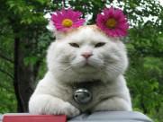 超级憨态可爱的猫叔图片 第一辑(63张)
